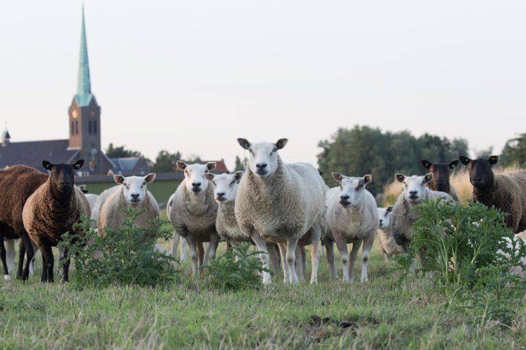 Casa rural ovejas