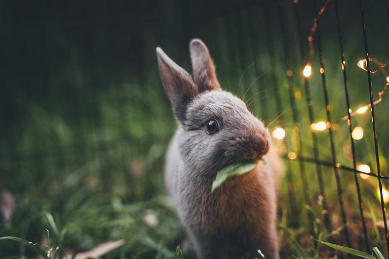 ¿Son los animales productos de consumo sujetos a garantía?