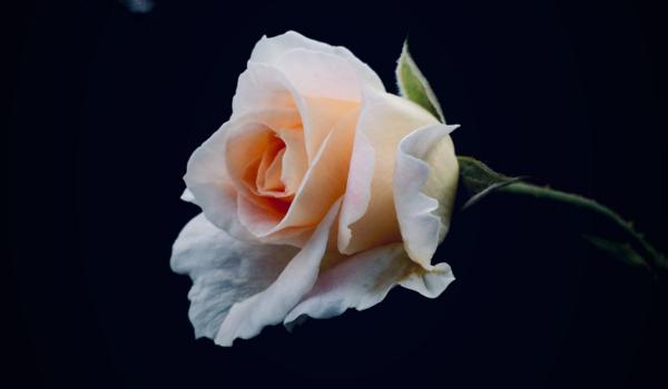 Ayudas al sector de las flores en Andalucía