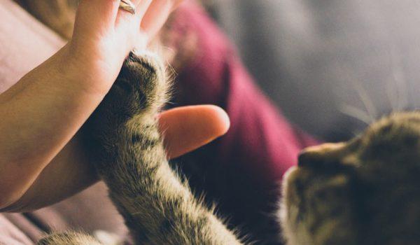 Obligaciones de los propietarios de animales de compañía en Galicia