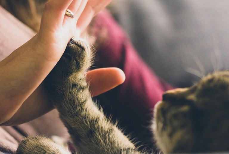 Viajar en tren con mascotas: derechos y obligaciones a tener en cuenta
