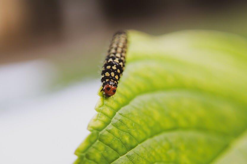 Insectos comestibles, cómo tomarlos y dónde comprarlos.