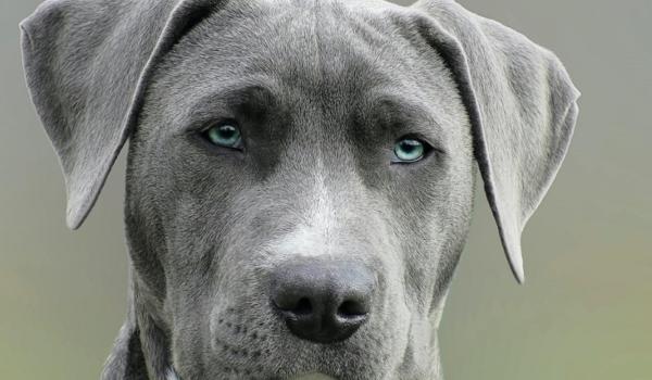 Se endurece la normativa de perros en el País Vasco
