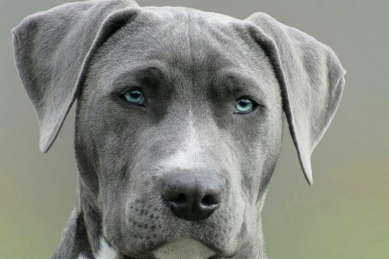 Perro Animal potencialmente peligroso