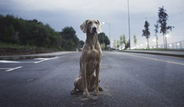 Multa por abandono de un perro en casa varios días