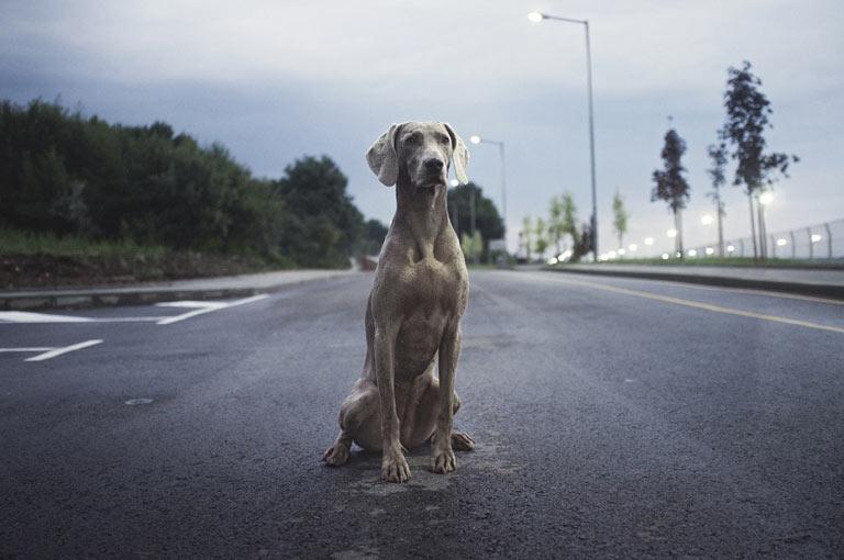 Abandono de animales y centros de recogida