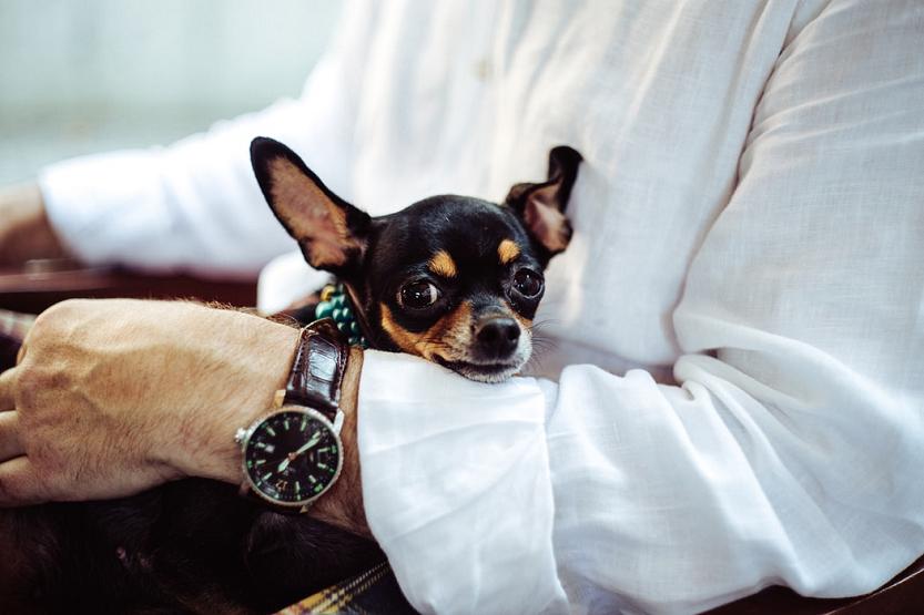 Samar autocares y las mascotas