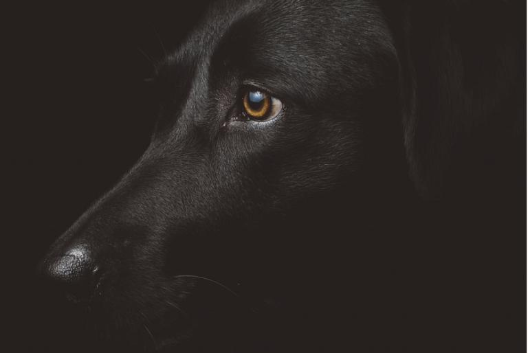 Perro de raza
