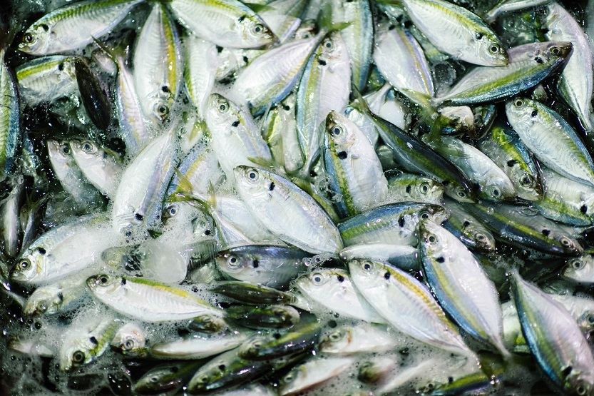 Andalucía regula la venta de productos pesqueros en origen
