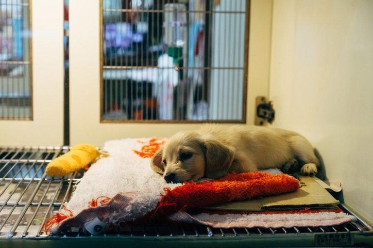 Tienda de animales perro