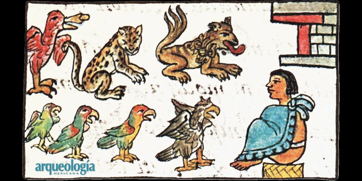 Totocalli casa de fieras y casa de aves Moctezuma