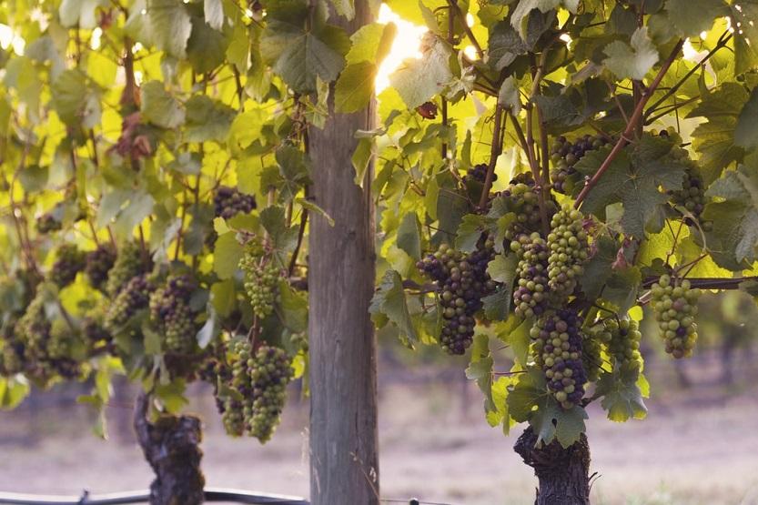 Gases industriales: aplicaciones en la producción de vinos y cavas
