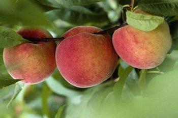 Los alumnos de colegios públicos de La Rioja recibirán fruta en los colegios en el curso 2014-2015