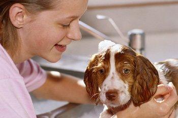 Cómo funcionan los lavaderos de perros