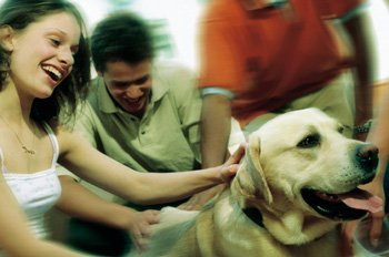 Casos en los que te pueden negar el acceso con un perro de asistencia